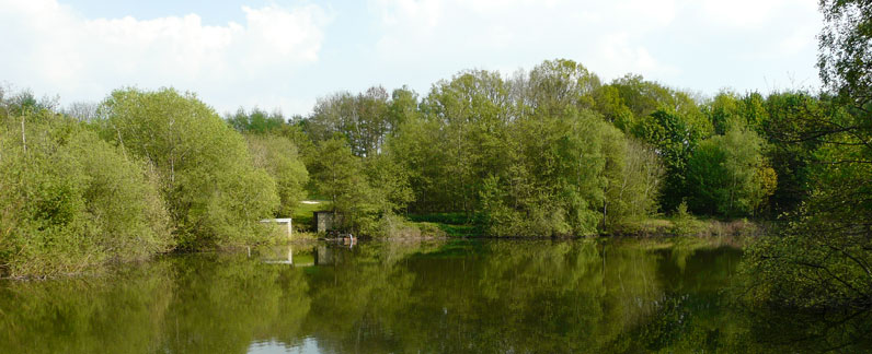 Paices Wood Country Parkland with seven lakes home to Seven Lakes Angling.